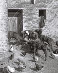 Picture of Devon - A busy Farmyard c1930s - N084